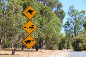 Campingtrip South-Westaustralia 1-15 (548)_1200x800