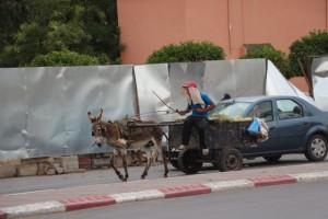 Morocco 2015 (117) (800x533)