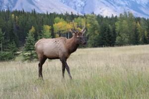 Banff Nationalpark mit Schatz (44) (800x533)