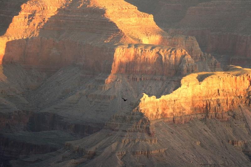 Las Vegas Grand Canyon engagement November 2015 (117) (800x533)